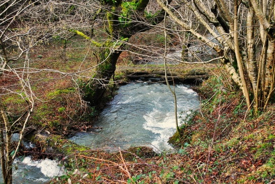 Le sentier suit le ruisseau dans la forêt et passe près d'un petit pont de bois.