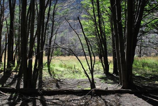 Puis nous repartons en direction de l'embarcadère, en bas au bord du lac. Autour du refuge, la forêt n'a pas été touchée par le feu.