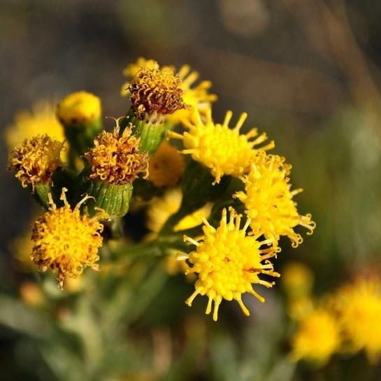 On a le temps de regarder les petites fleurs au bord du chemin