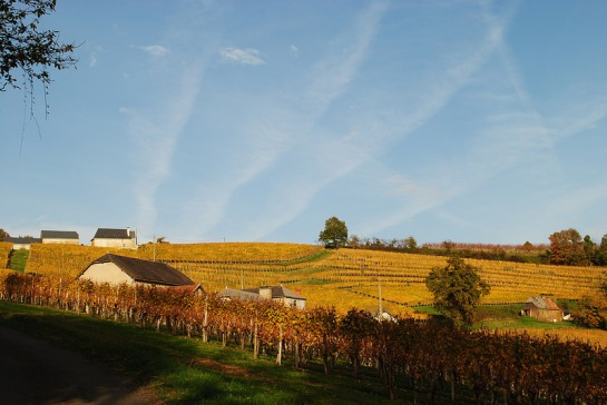 Autour de nous, les lignes dessinées par les rangées de vignes trouvent un écho avec les sillages des avions dans le ciel.