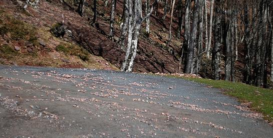 Sur l'asphalte, les lignes de cailloux témoignent de l'abondance des dernières précipitations.