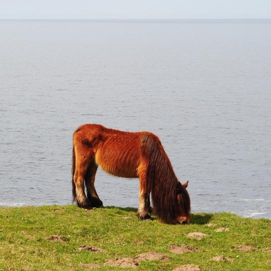 De l'autre côté du ruisseau, au bord de la falaise, il y a un cheval qui broute dont Fanny dirait qu'il a la même coiffure que le cousin Machin (cf famille Adams).