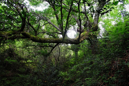 Le chemin traverse plusieurs ruisseaux, dans des ravins boisés.